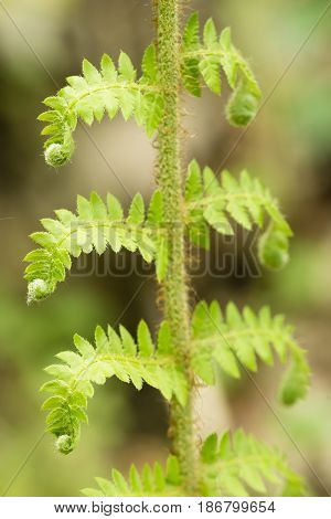 Young green fern leaves growing in the underbrush.