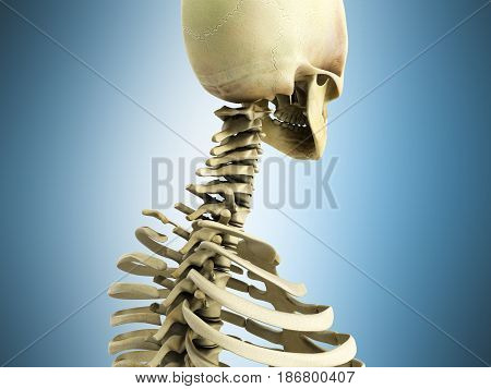 Medically Accurate 3D Illustration Of The Skeletal System The Cervical Spine On Blue