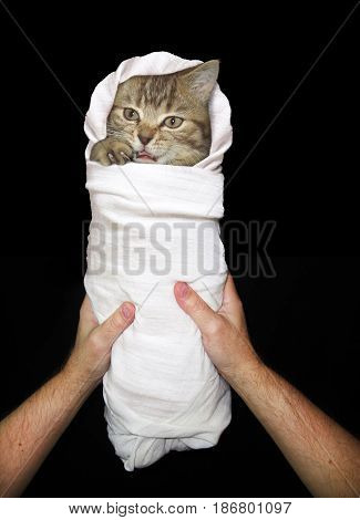 The man is holding a kitten. It is in swaddling clothes. Black background.