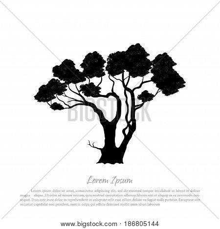 Black silhouette of a tree on white background. Australian nature. Desert landscape. Vector illustration