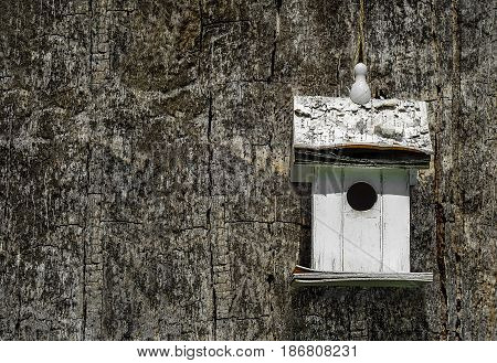 White lonely nesting box on a very old tree