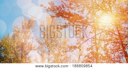 Glowing background against low angle view of trees against sky