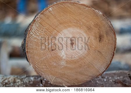Background Slit Wood, Natural Texture Of Wood, Cut Off Chainsaw