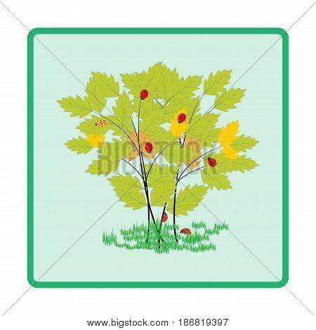 Ladybird on twig card. Illustration ladybug on green leaf. Cute colorful sign red insect symbol spring summer garden. Template for t shirt apparel card poster Design element Vector illustration