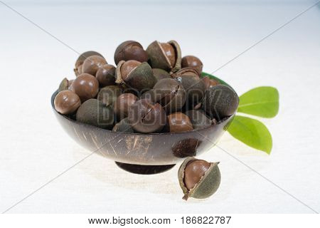 Macadamia nuts in shell new harvest close up on white background