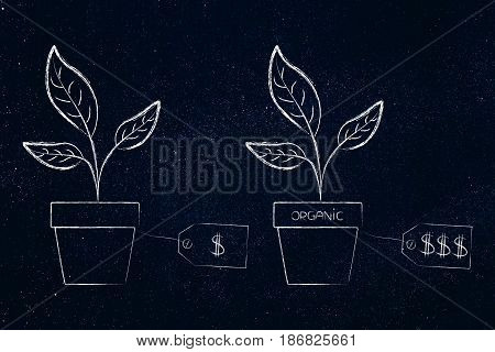 Plants In Vases With Different Price Tags