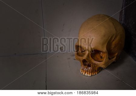 Skull on dirty floor image close up