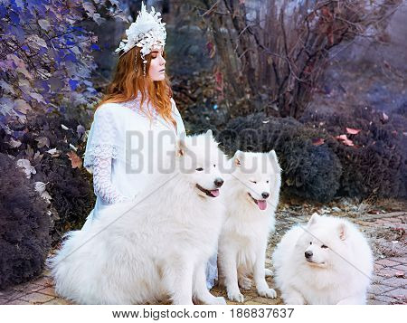 red hair (ginger) beautiful young girl (snow princess) in long white dress with three samoyeds outdoor
