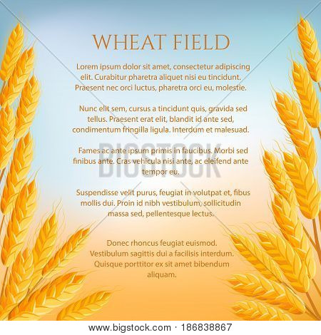 Wheat field agricultural concept with space for text. Background with wheat bread ears, cereal crop harvest vector illustration. Bakery design, organic local farming, healthy and natural agriculture.
