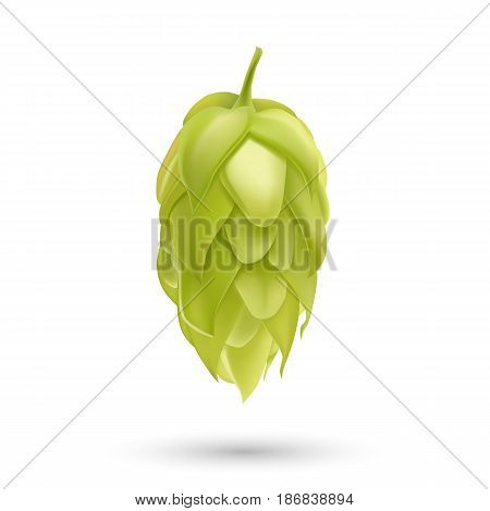 Hop plant 3d vector icon isolated on white background. Hops beer vector illustration