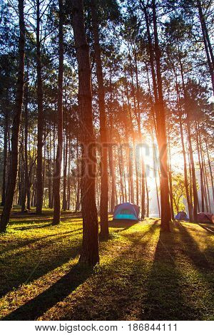 Camping and tent under the pine forest in sunset at Pang-ung pine forest park Mae Hong Son North of Thailand