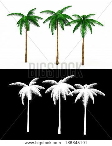 3D rendering of three palm trees on a neutral white background With alpha channel