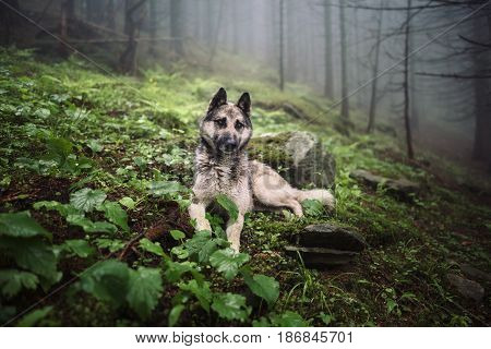 Dog sits in a mystical forest. Vintage look. Dog walking outdoors in a forest