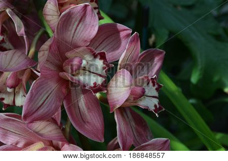 Garden with blooming red and white orchids flowering.