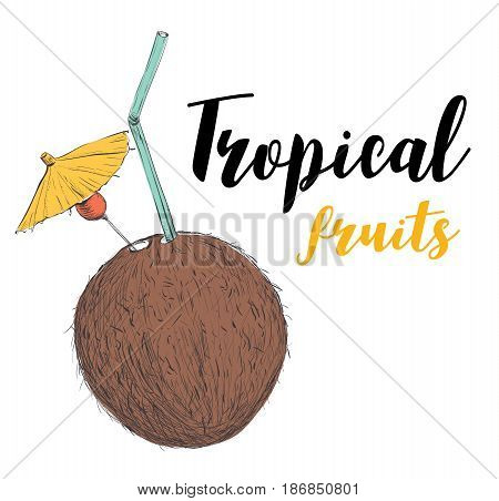 Coconut cocktail with a straw and an umbrella. Tropical fruit coconut. Vector illustration of a sketch hand drawing