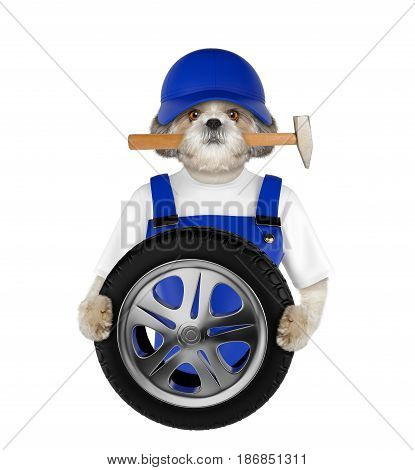 Wheel repair. Shitzu dog isolated on white background