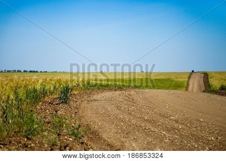 Country road field of gold wheat field barley wheat agriculture grain