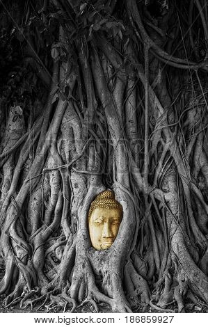 Head of Sandstone Buddha in The Tree Roots from Wat Mahathat Ayutthaya Thailand