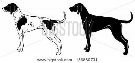 Pointer dog set - outline and silhouette vector