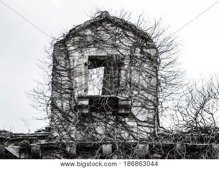 Old ruined stone scary spooky haunted antique abandoned forsaken house overgrown in dry wilted poison ivy as antique architecture and halloween concept background