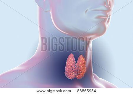 Thyroid gland inside human body. 3D illustration