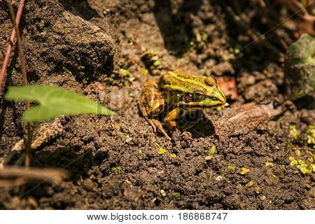 Green toad on nature background