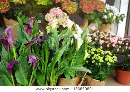Beautiful fresh flowers in shop