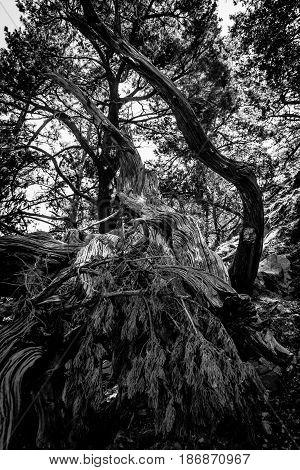 Felled trees. Samaria Gorge. Island of Crete. Greece.