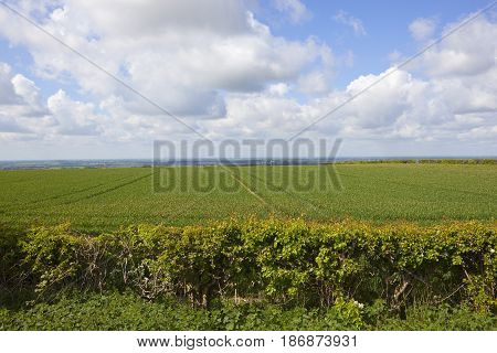 Wheatfields And The Vale Of York