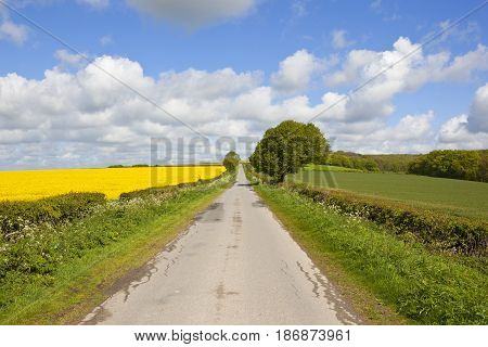 Country Road And Oilseed Rape