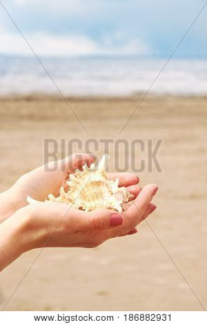 Female hands hold a beautiful cockleshell in the palms against the background of the sandy beach and the water of the bay.