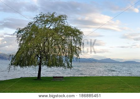 Tree near the sea green grass and place for text