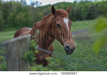 Horse behind a fence in late afternoon in rual Virginia