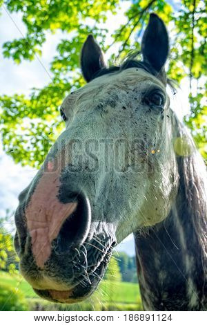 A face of a horse on the horse string