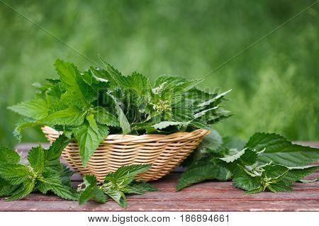 Basket of fresh stinging nettle leaves on wooden table
