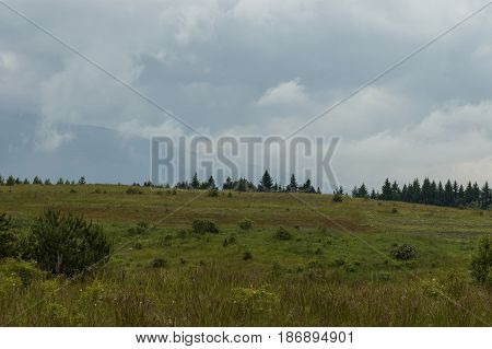 Majestic spring forest, fresh glade with different grass and blossom  wildflower, Plana mountain, Bulgaria
