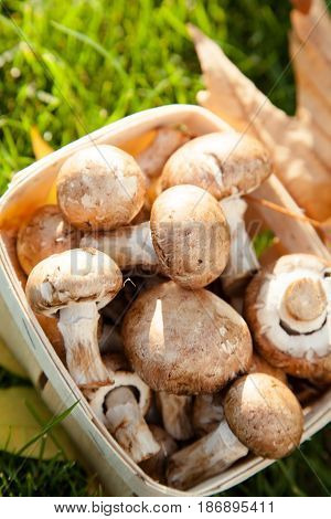 Basket vegetables mushrooms autumn champignon crimini mushroom button mushroom