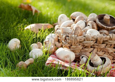 Basket vegetables mushrooms champignon crimini mushroom button mushroom fungi