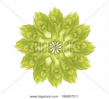 Abstract Hop flower plant 3d vector icon isolated on white background. Hops beer vector illustration
