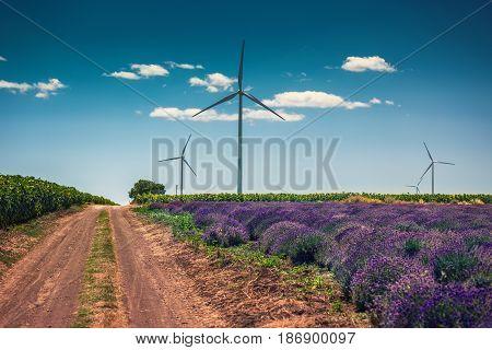 Beautiful Lavender Farm And Windturbine On The Back