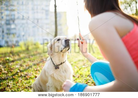 Girl training labrador dog at park in spring afternoon