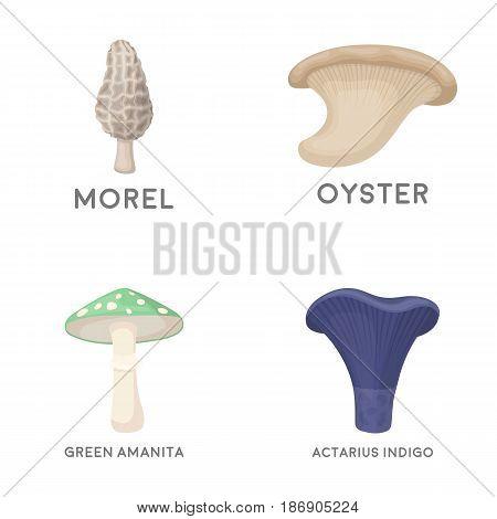 Morel, oyster, green amanita, actariu , indigo. set collection icons in cartoon style vector symbol stock illustration .