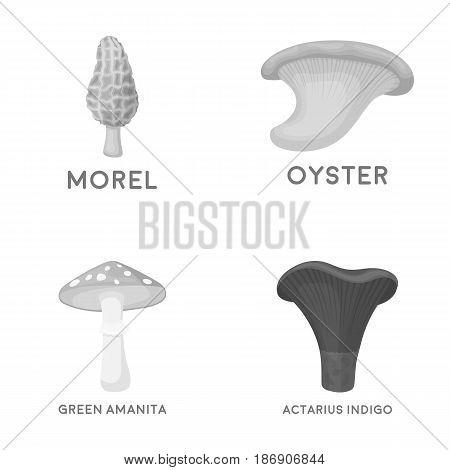 Morel, oyster, green amanita, actariu , indigo. set collection icons in monochrome style vector symbol stock illustration .