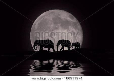 Silhouette of African Elephants at Moon Rise