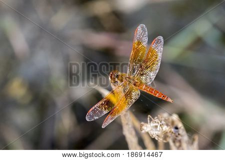 mage of dragonfly perched on a tree branch on nature background. Insect Animals.