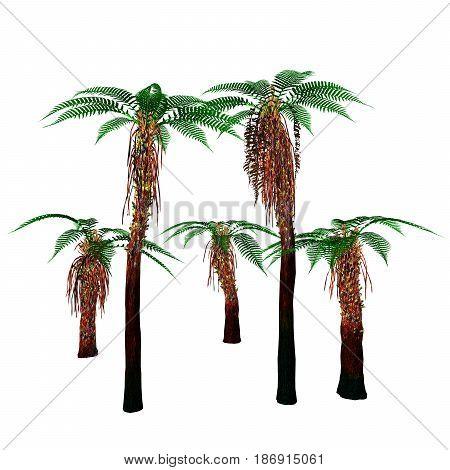 Dicksonia Trees 3d illustration - Dicksonia antarctica is an evergreen tree native to Australia and Tasmania.