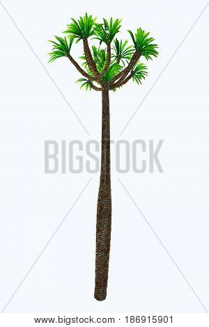 Pachypodium lamerei Tall Tree 3d illustration - Pachypodium is a genus of African arboreal plant that lives in dry and arid conditions on Madagascar and the mainland.