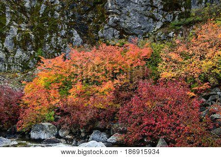 Taken from Tumwater Canyon WA along Hwy 2