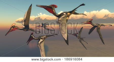 Pterodactylus Pterosaurs in Flight 3d illustration - A flock of Pterodactylus Pterosaurs fly out to the ocean to hunt for fish in the Jurassic Period.
