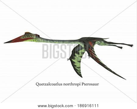 Quetzalcoatlus Wings Down with Font 3d illustration - Quetzalcoatlus was a carnivorous pterosaur reptile that lived in the Cretaceous Period of North America.